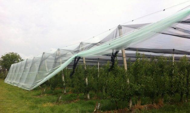 Hasta un 39% de reducción del consumo de agua en frutales de hueso bajo mallas antigranizo