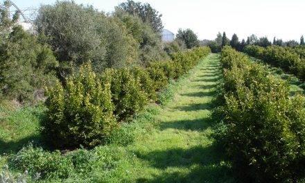 Pospuesta la aplicación del nuevo Reglamento Europeo para la Producción Ecológica a 2022