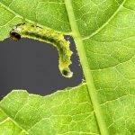 Nueva generación de fitosanitarios: moléculas de ARN bicatenarios