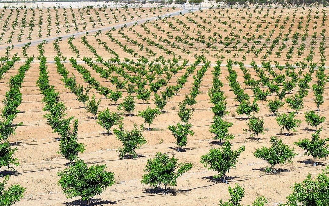 Agronutrientes y bioestimulantes cumpliendo con la legislación actual