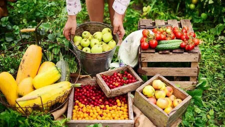 Diversificar la fruticultura española, una meta posible
