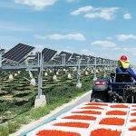 Transforman el desierto en campos de cultivo y paneles solares