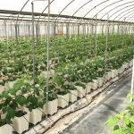 Soluciones Projar para el cultivo de frambuesa