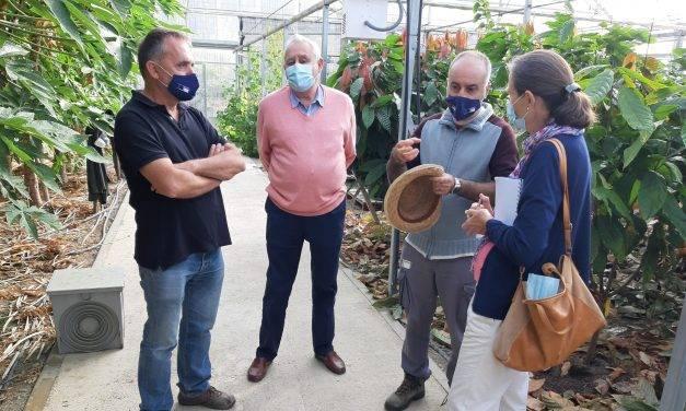 En La Mayora tienen ensayos de variedades de aguacates para todo el año