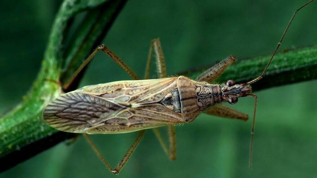 El comportamiento de insectos según modelos matemáticos