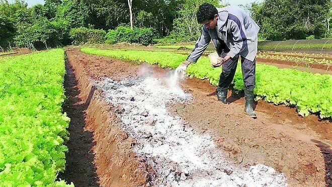 ACV, un método para cuantificar el impacto ambiental en los suelos de las actividades humanas