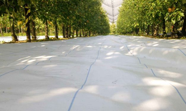 Agritela Lux© un tejido de acolchado de Arrigoni protege los manzanos y granados