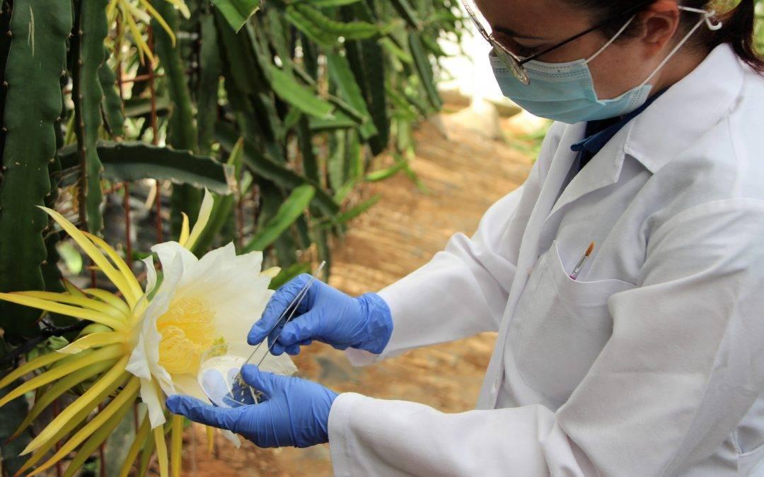 Tecnova estudia nuevas variedades de pitahaya adaptadas al modelo Almería