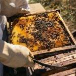 Las abejas y su desinteresado aporte contra la contaminación ambiental