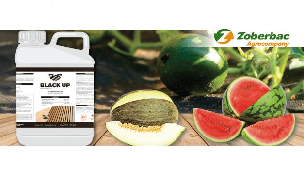 BLACK UP®, el bioactivador de suelos para la campaña del melón y sandía de Zoberbac