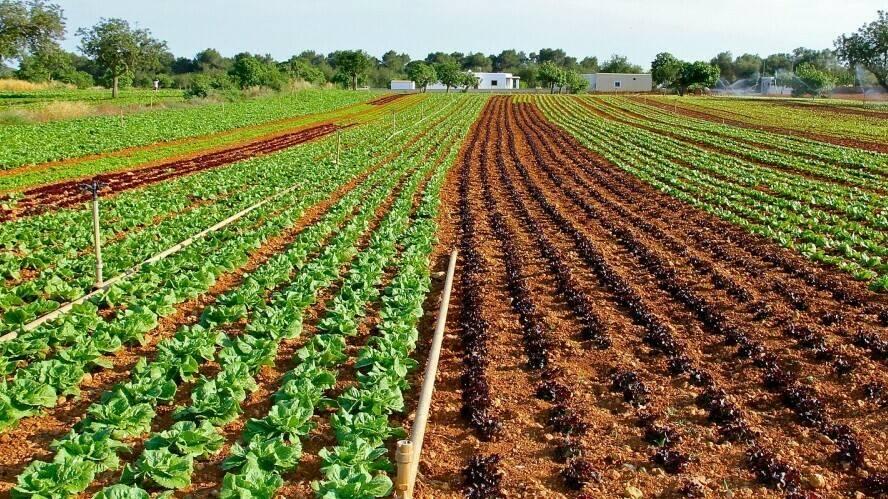 El agotamiento del fósforo, un nutriente indispensable en la agricultura mundial