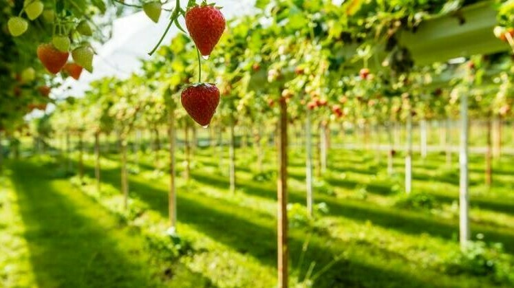 Proyecto Bio4safe para una horticultura más eficiente