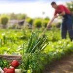 Herbicidas de origen natural, una alternativa necesaria