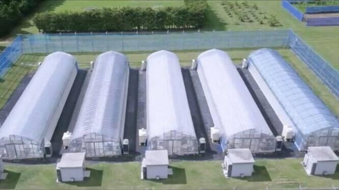 Horticultura en invernaderos a prueba de tifones