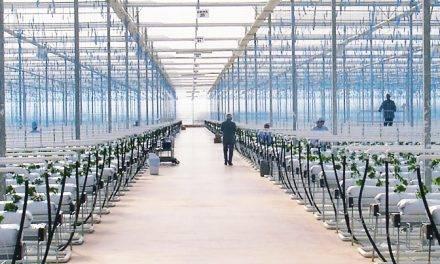 Novagric: agricultura inteligente