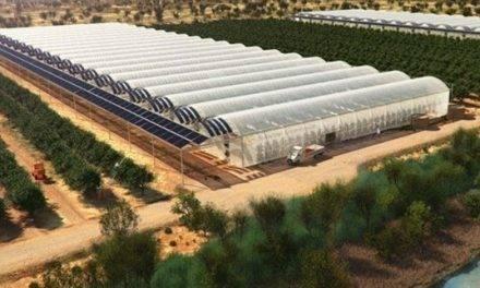 Horticultura en el desierto africano