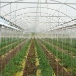 Rafia biodegradable: por una horticultura más sustentable