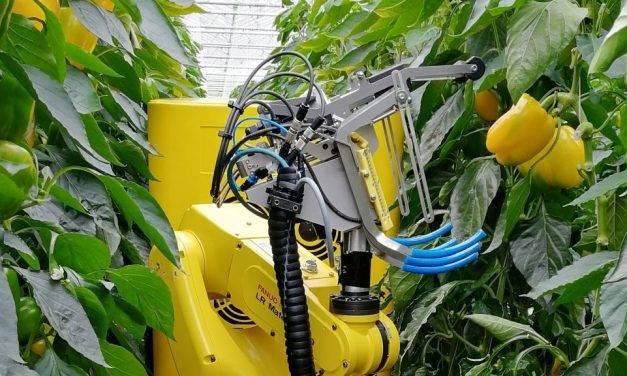 Robots diseñados para la agricultura del futuro