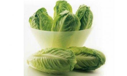 Innovación y sostenibilidad en brássicas y ensaladas en Syngenta