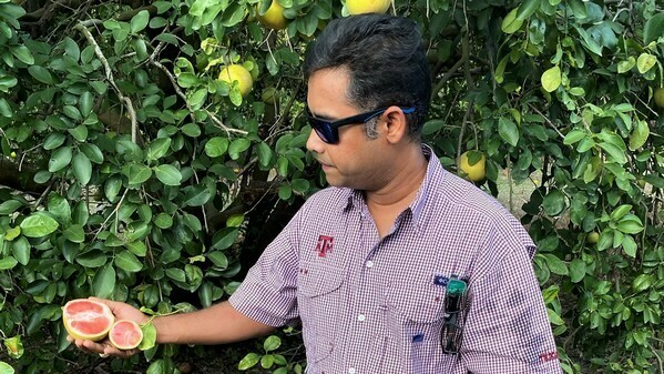 Texas A&M AgriLife researchers make a breakthrough in fighting agricultural plant diseases