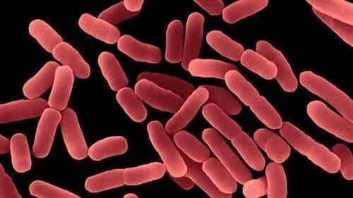 Descubren nuevas funciones en agente de biocontrol