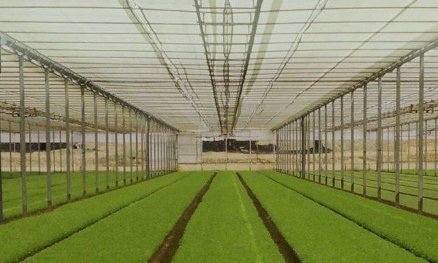 Control climático en invernaderos con pantallas Robuxta de Arrigoni