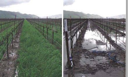 La Agricultura de Conservación como solución a la pérdida y degradación de los suelos