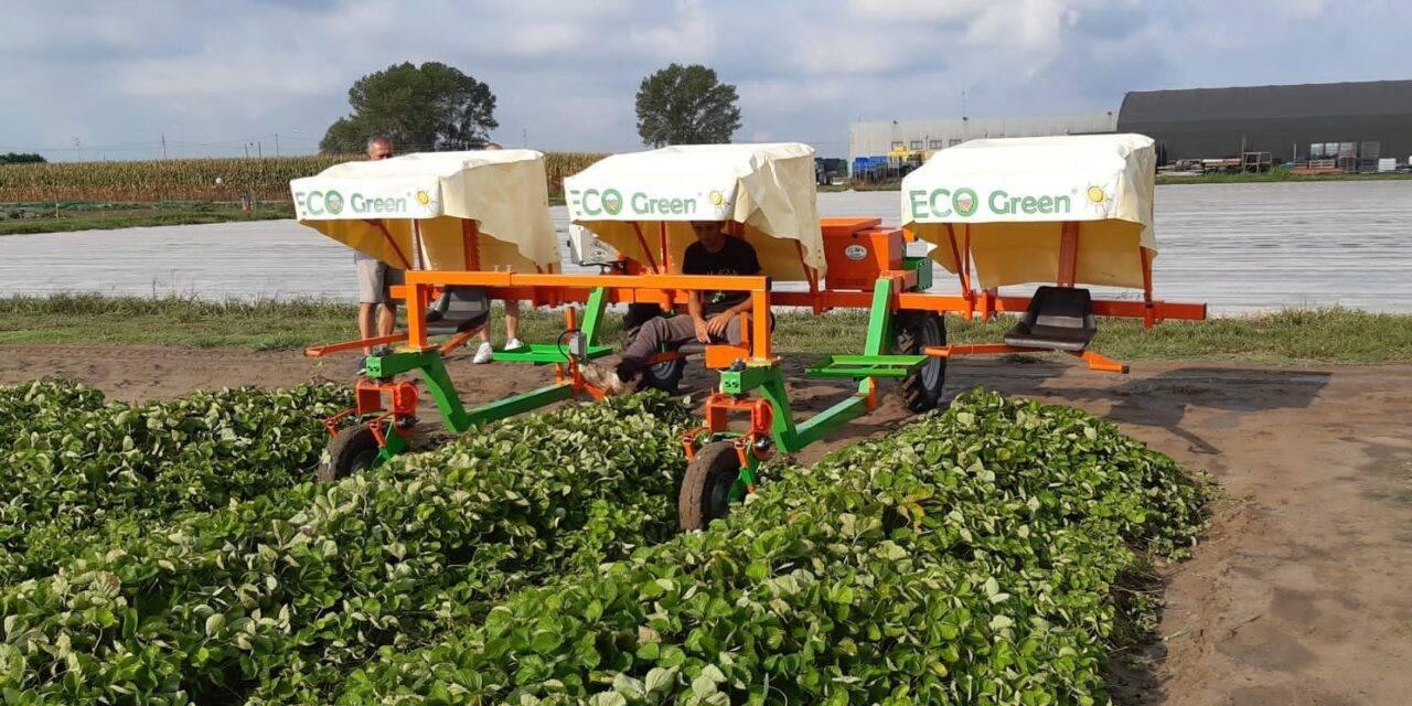 Máquinas eléctricas para el cultivo de frutos rojos