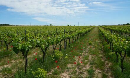 La agricultura ecológica, una manera de producir