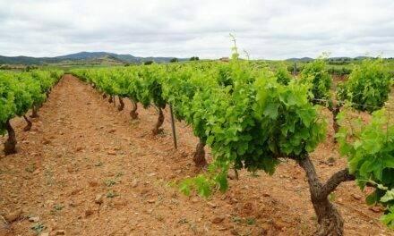 Fertilizantes UNE acreditados, una demanda del mercado ecológico