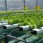 Los cultivos hidropónicos y sin suelo tienen su cita en Argentina