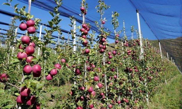 Cambio climático: Cataluña es la elegida para plantar los primeros manzanos más adaptados en 2021