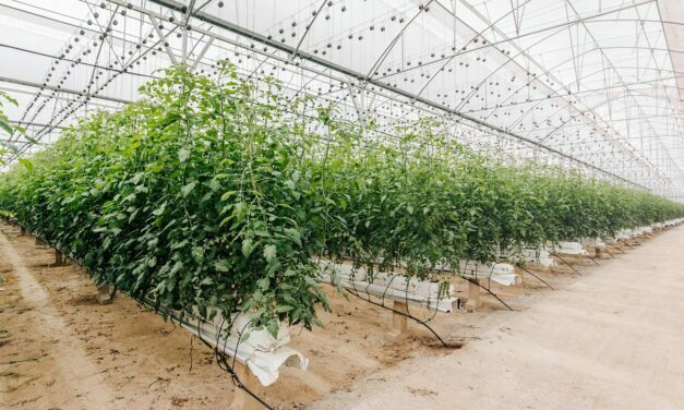 El riego de cultivos hidropónicos en invierno