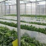 Control climático en invernaderos: la UAL lleva a la práctica una década de teoría