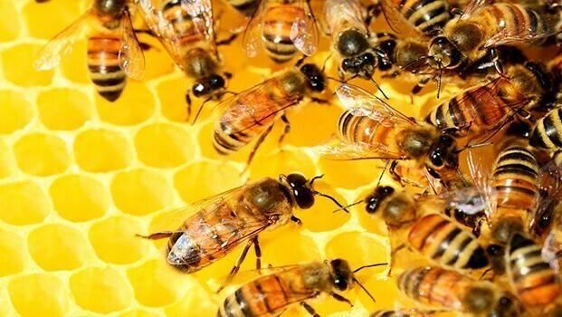 Las abejas y el precio de la almendra