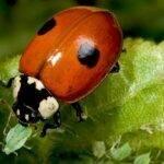 Nueva guía de campo: Artrópodos de los invernaderos hortícolas