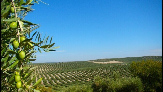 EU-funded «ARTOLIO» project to support small olive oil producers across the Mediterranean