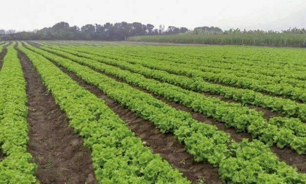 Para suelos cansados, la solución es NEMA 300 WW de Agriges