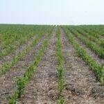 La UE incluye la agricultura de conservación en el listado de eco-esquemas, pero ¿Qué hay de la siembra directa?