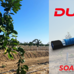 Cítricos: excelente resultado en riego por goteo con Dual® de Soaplast