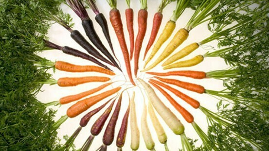 Carrots' microbial allies could help to fight Alternaria