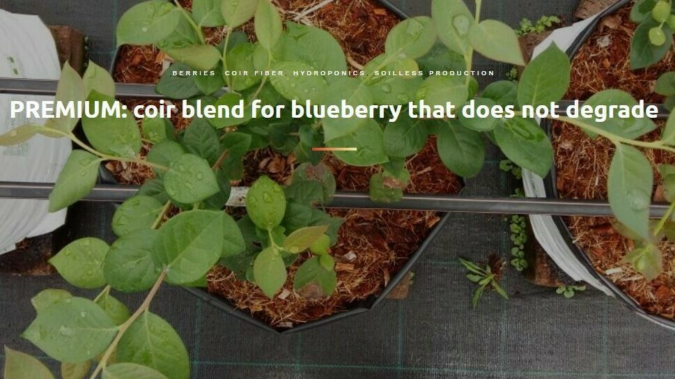 Coir blend for blueberry that does not degrade
