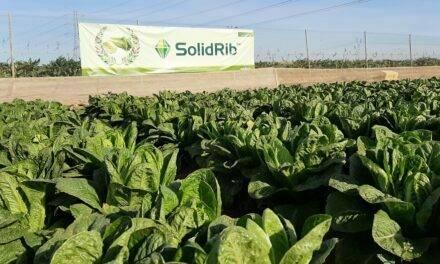 Últimas innovaciones de Syngenta en cultivos de hoja