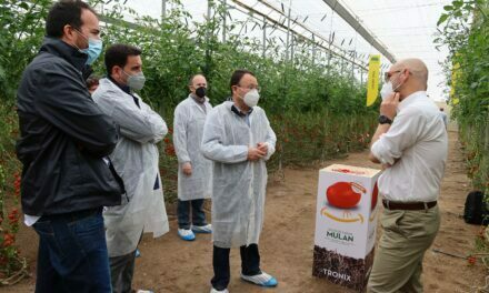 """Semillas Fitó lanza el distintivo """"Flavourite"""" para diferenciar sus variedades con más sabor y calidad"""