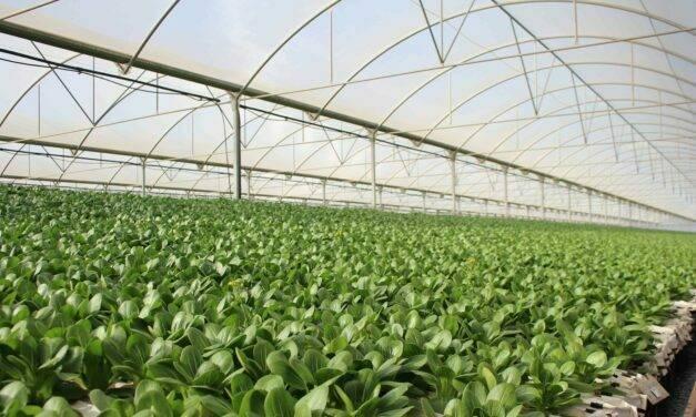 Cultivos hidropónicos, la apuesta de Primaflor por una agricultura más sostenible