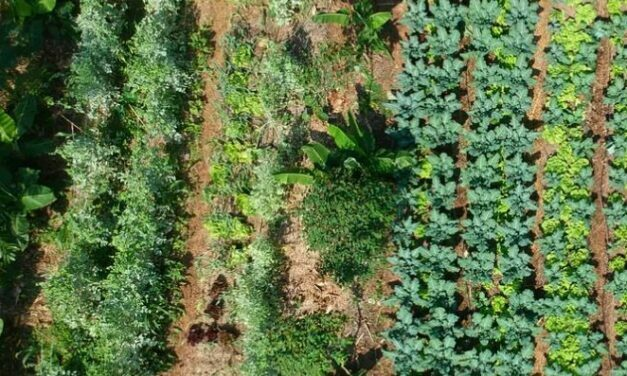 ¿Agricultura ecológica y agroecología son lo mismo?