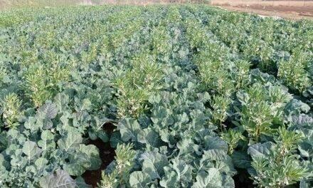 AsociaHortus, un beneficioso proyecto de asociación de cultivos hortícolas