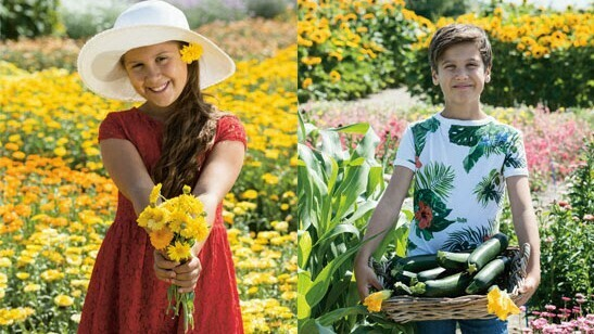 Fleuroselect kicks off promotion for 'Year of the Calendula & Courgette'