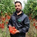 Semillas Fitó: la variedad de tomate Ateneo llega a 1 millón de toneladas producidas