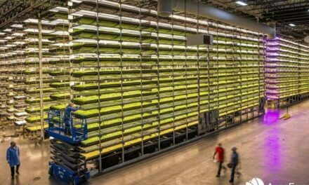 Next Generation of Blueberry and Caneberry Production in Vertical Farms by AeroFarms & Hortifrut